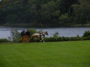 אירלנד - עגלה עם סוסה